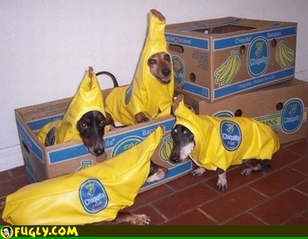 Bananas or dogs?