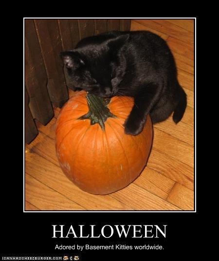 Pumpkin Halloween Black Cat