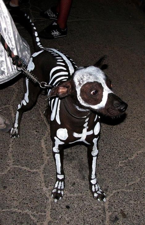 doggie skeletor