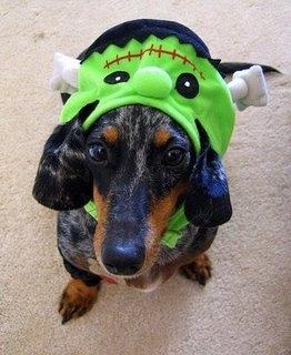 Beware of Frankendog!