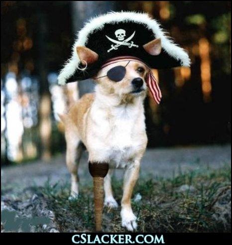 Dog Captain