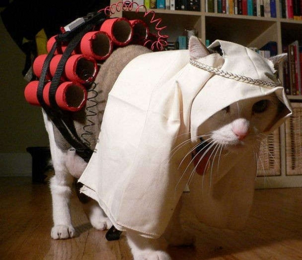 Cat time bomber