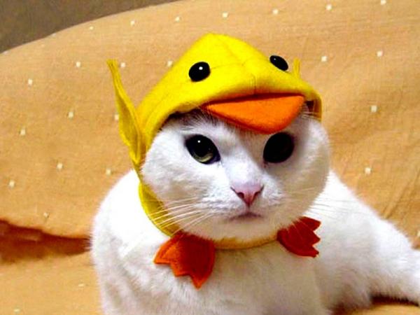 Cat wearing duck hat