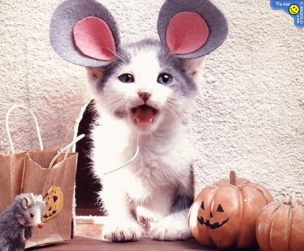 Kitten wearing mouse ears