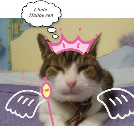 Squinting cat with Princess Tiara