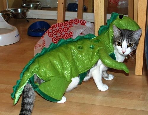 Cat wearing dinosaur costume