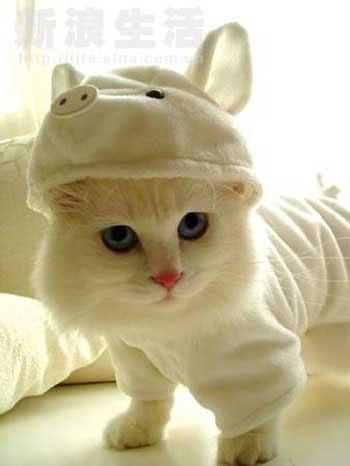 Piggy Kitty