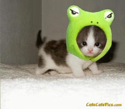 Kitten With Silly Hat