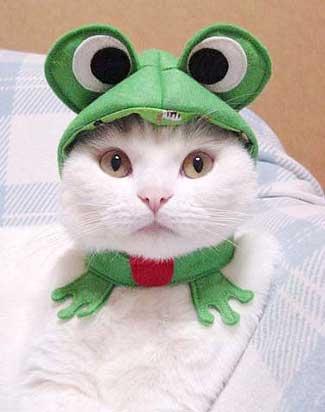 Cat wearing keroppi hat