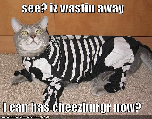 Cat in skeleton costume