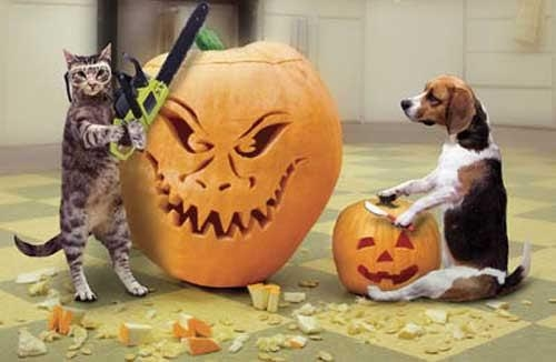 Dog and Cat Carving Pumpkins