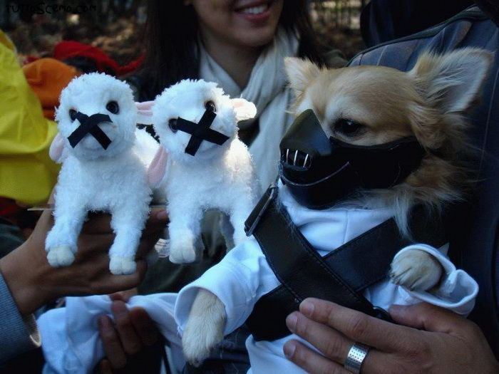 Dogs in Star Wars Character Halloween Costumes