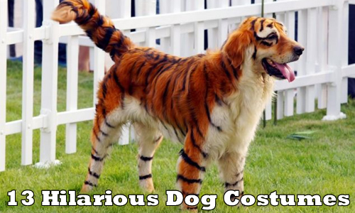 Dogs Tiger Get-Up For Halloween & Dogs Tiger Get-Up For Halloween Dogs Tiger Get-Up For Halloween ...