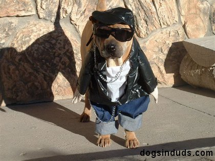 This Dog is The Gangster of Halloween