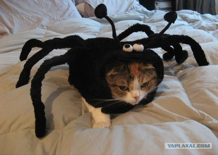 Cat or Spider!!!
