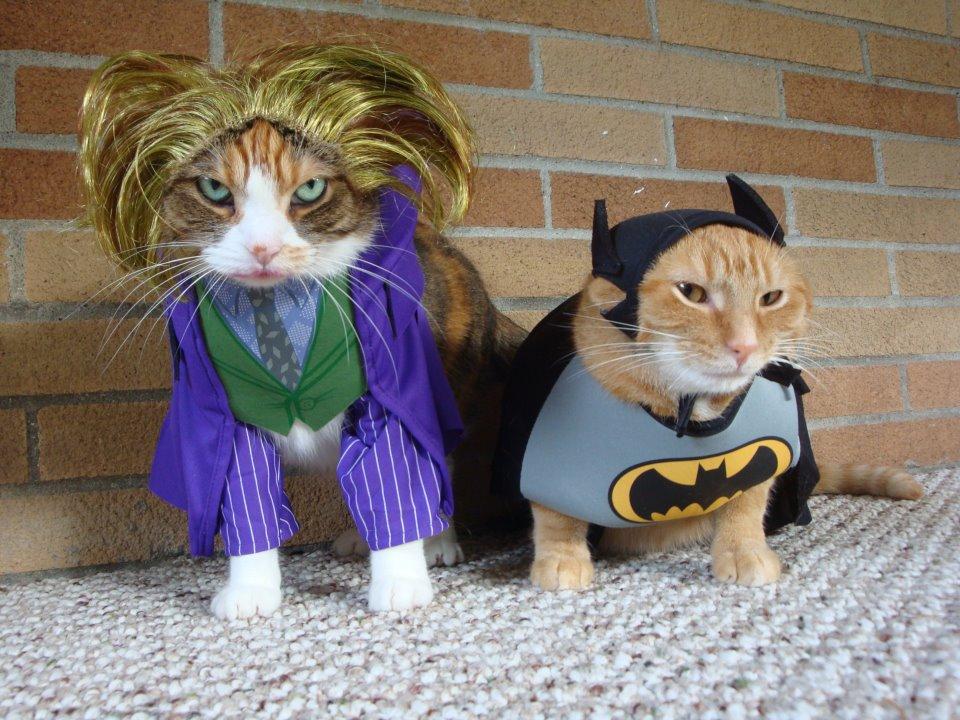 Cats in Batman Characters