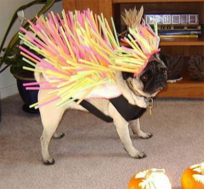 Dog Seems Unhappy With his Funny Costume