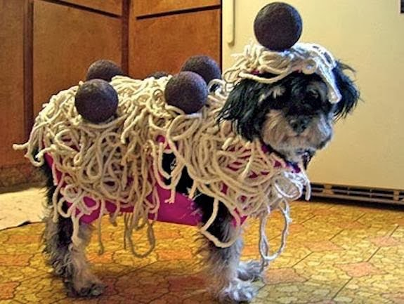 Dog Has Meatballs For Halloween Costume & Dog Has Meatballs For Halloween Costume Dog Has Meatballs For ...