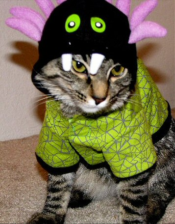 Funny Cat in a Fancy Halloween Costume