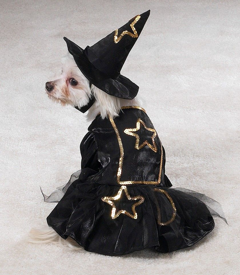 Cute Doggy in a Witchy Costume