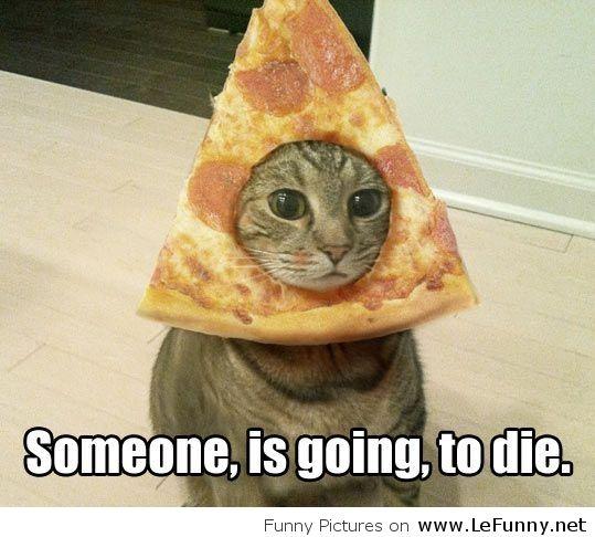 cat got pizza hat for halloween - Funny Cat Halloween