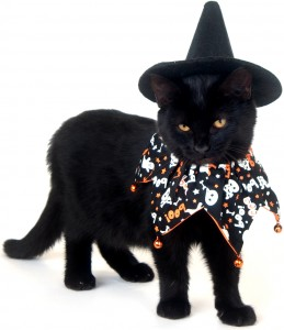 Black Cat Looks Really Witchy