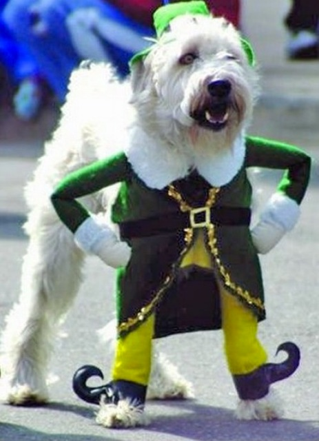 Dog in Really Funny Halloween Costume