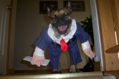 Dog in Businessman Suit Tie Costume