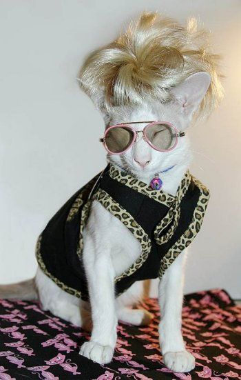 cat in celebrity outfit - Funny Cat Halloween