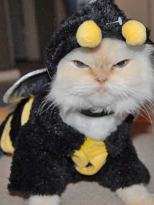Cat With Serious Look in A Very Funny Costume