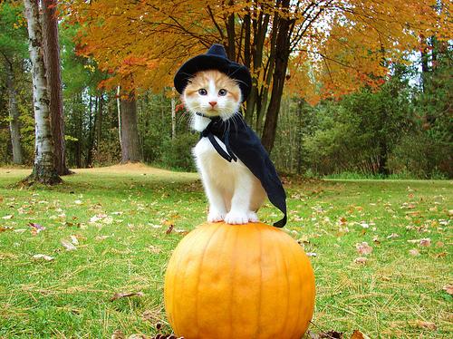 Cute Little Cat in Witch Costume