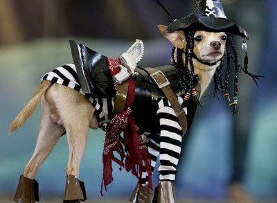 Dogs in Pirate Costume