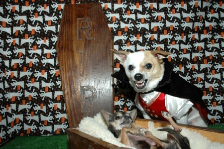Dogs in Coffin and Dracula Costume