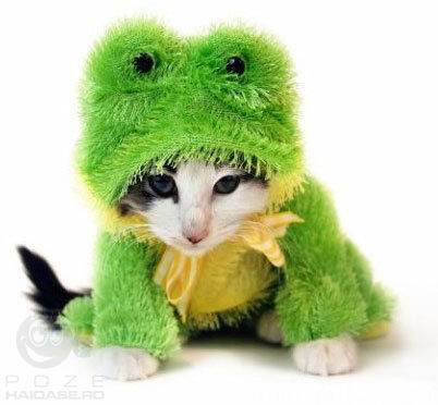 Cut Little Cat in Frog Costume