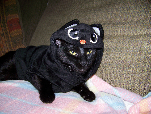 cat mimics itself in its costume - Funny Cat Halloween