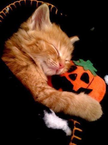 Cute Little Cat Loves Mr. Pumpkin