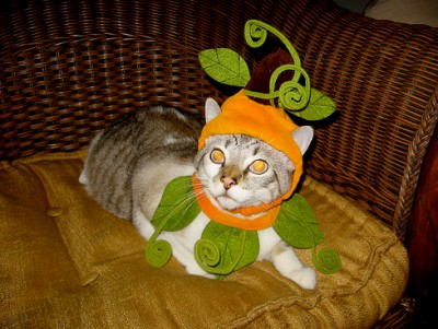Cat in Natural Halloween Costume