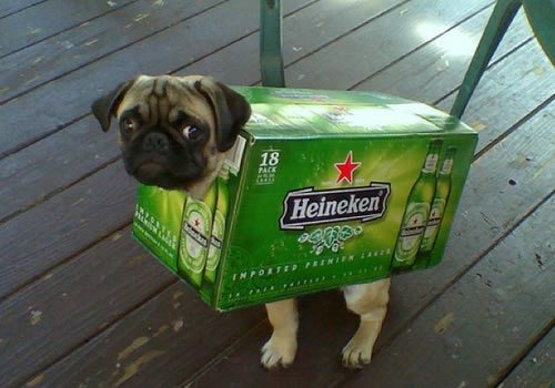 Dog in Cool Beer Case Costume
