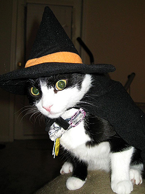 Cat Puts on Witch Hat With Funny Expression