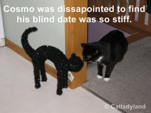 Cat Got Tricked With His Stiff Date