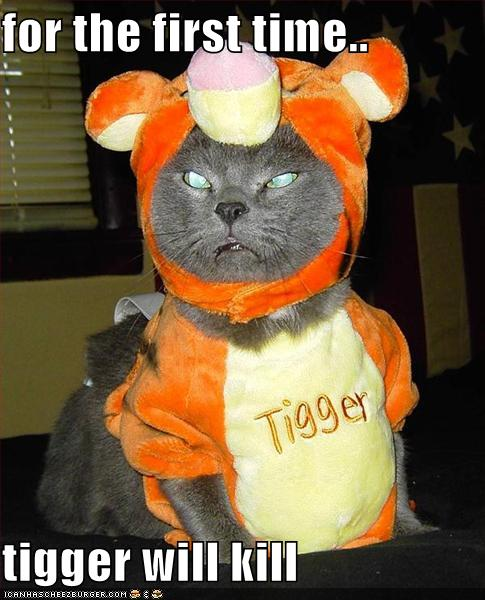 Cat Looks Really Angry in Tiger Outfit
