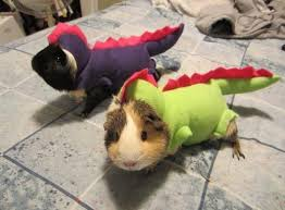 Guinea pigs in Funny Halloween Costume