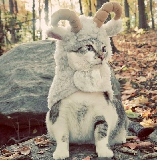 Cat in Goat Costume