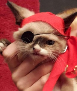 Pirate Little Cat is The Star of Halloween