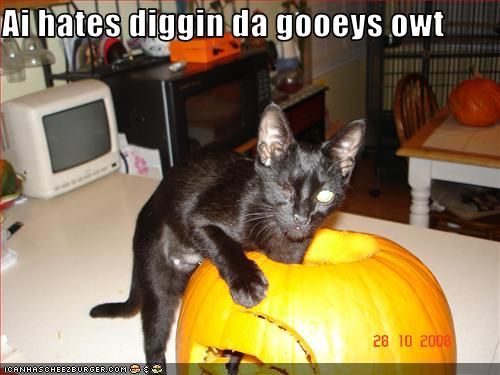 cat hates being out of candy - Funny Cat Halloween