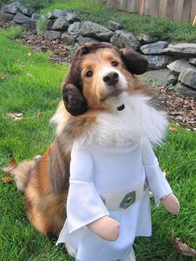 Cute Doggy Posses as Princes Leia