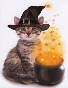Tabby Halloween Cat