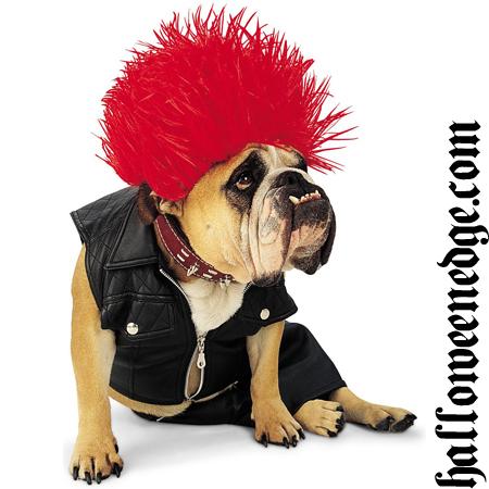 Dog Got The Rockstar Look For Halloween